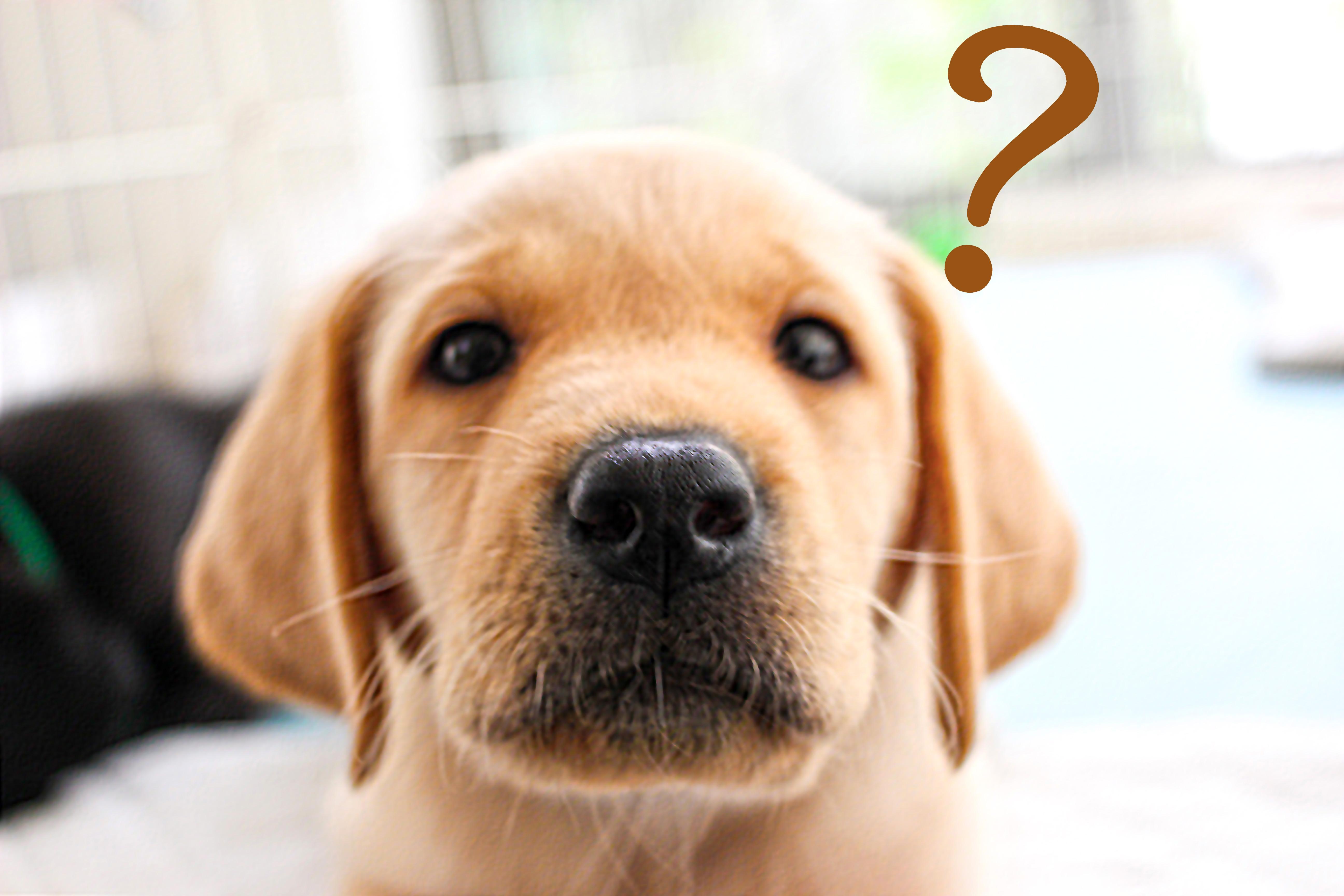 犬を飼いたい!①犬を飼うってどうなの?第一ステップ「悩み」編