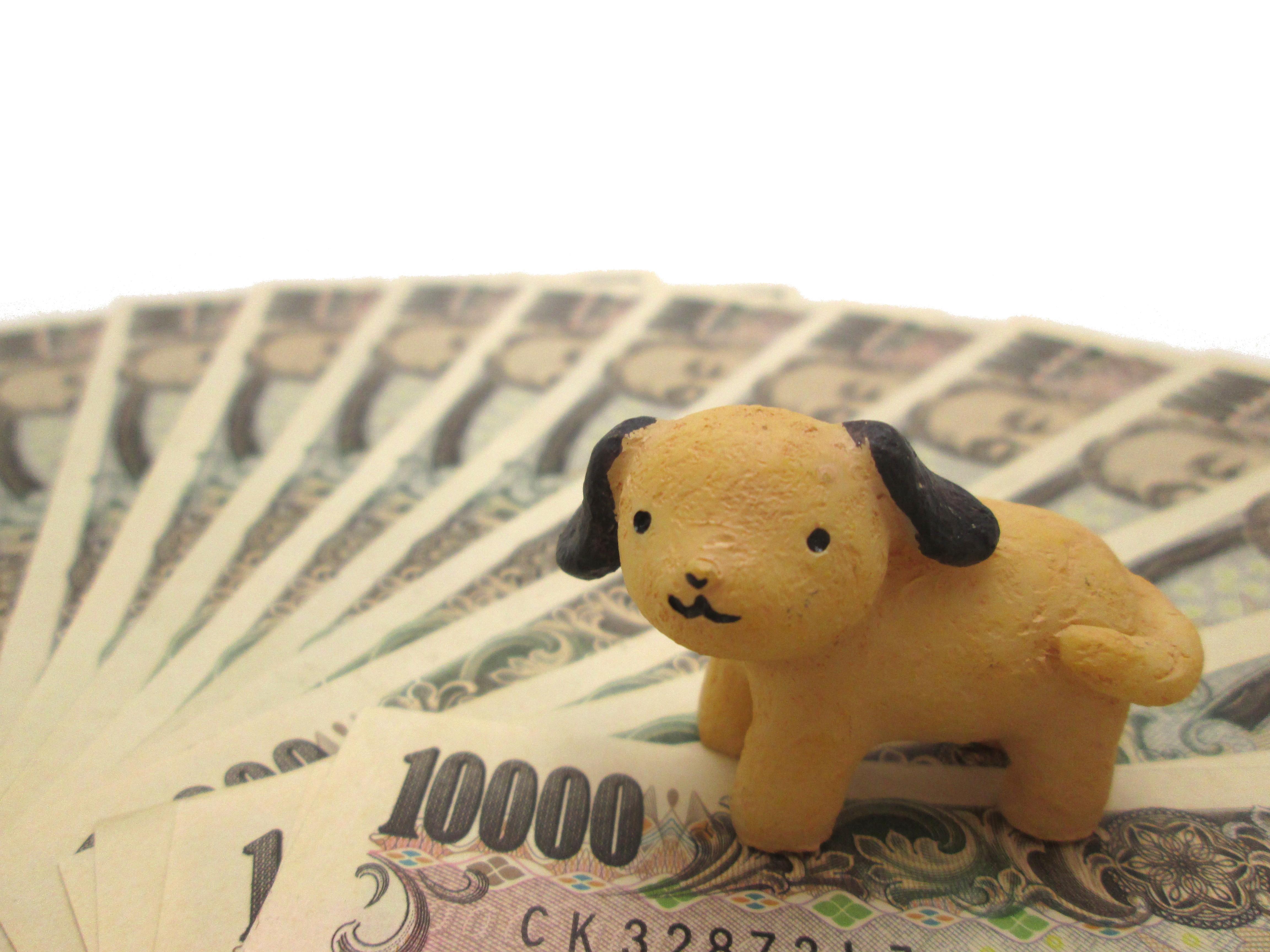 犬を飼いたい!③お金はどれくらいかかる?初期費用編
