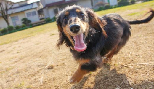 犬の避妊手術の予約|やってはいけない3つの病院の選び方