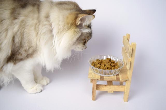 フードを食べようとする猫