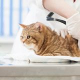 診察を受ける猫