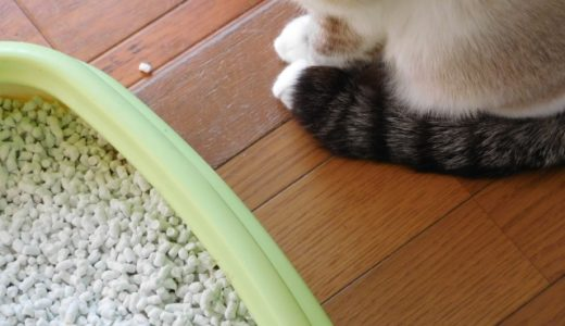 猫の腎臓病の原因が発覚?ネコモルビリウイルス感染症とは