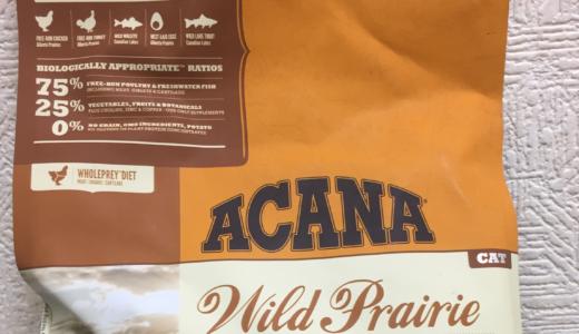 【アカナ】ワイルド・プレイリーを我が家の猫に食べてもらった感想|納得できるキャットフードを求めて